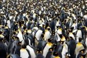 plusieurs pingouins