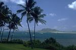 quelques palmiers